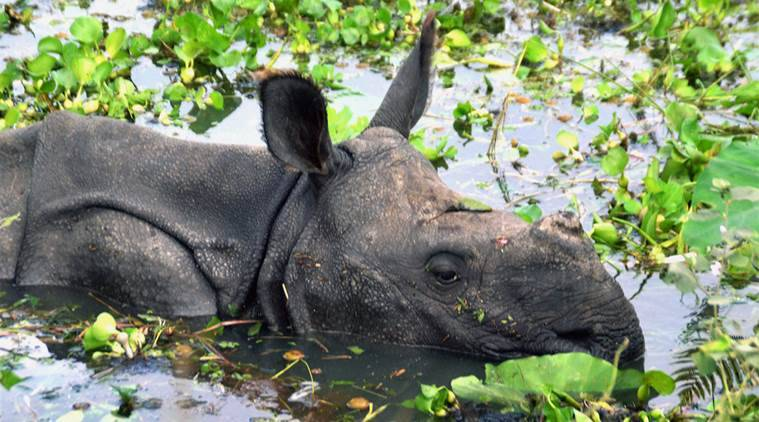 kaziranga, kaziranga national park, assam tourism, assam, kaziranga express, railways, railway news, assam news, india news