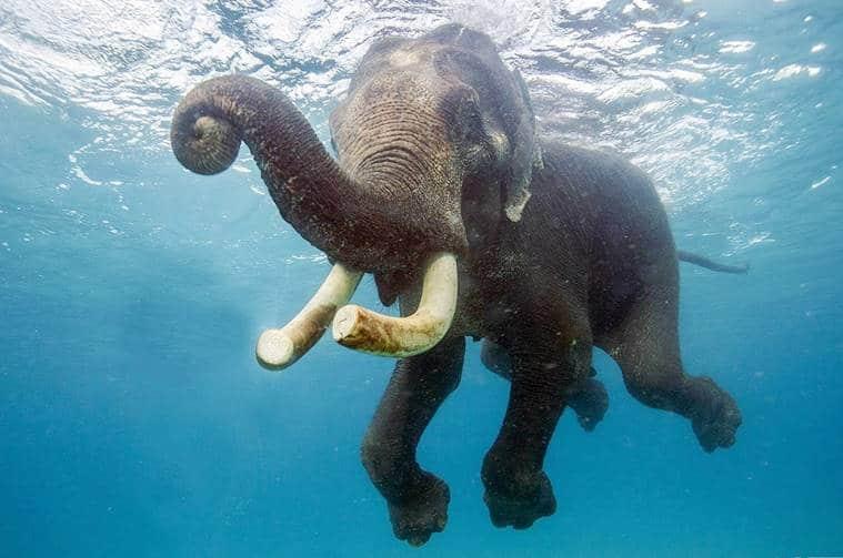 rajan elephant2_759_CCTV