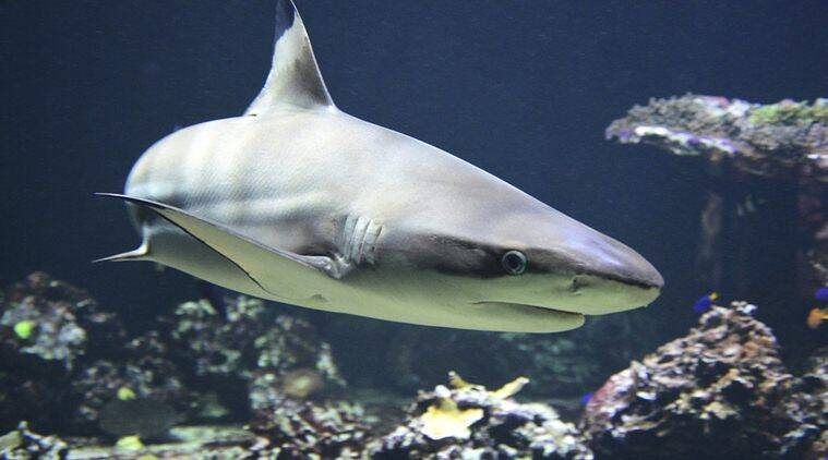 shark meat unhealthy, shark meat bad for health, shark meat toxic, shark meat may cause Alzheimer's