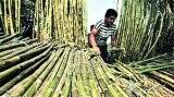 Maharashtra sugar mills irked by Central government's 37 per cent sugar quota bar