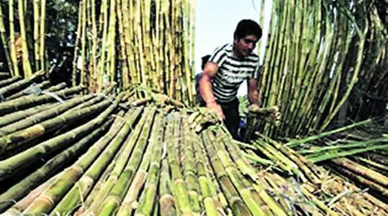 drought, maharashtra drought, drought in maharashtra, marathwada, western maharashtra drought, sugar producion, maharashtra sugar production, sugar price, indian express news, mumbai, mumbai news, india news
