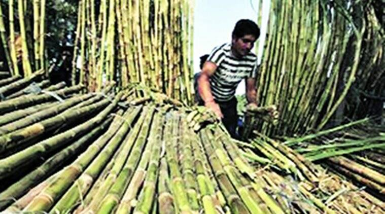 sugarcane farms