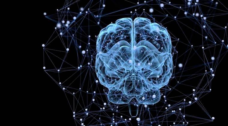 human brain, genetic blueprint of human brain, lifestyle news, indian express,