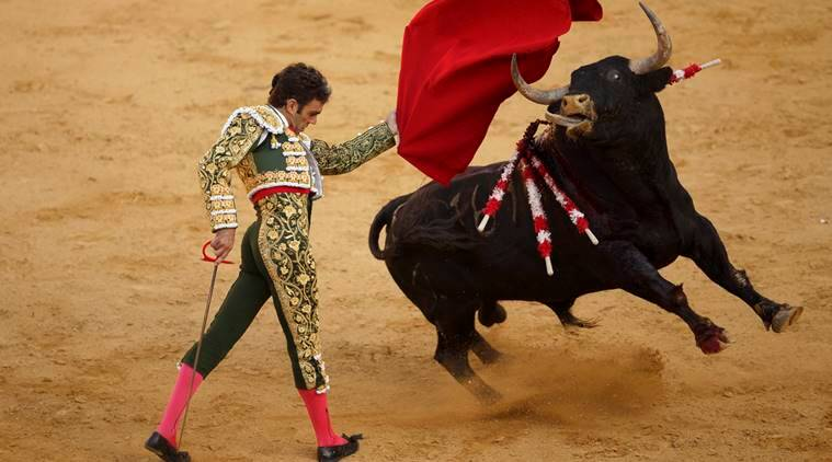 bullfighting, bullfighting spain, bullfighting spain protests, bullfighting madrid, animal rights movement, bullfights, blood sports, spain news. world news, Indian Express news