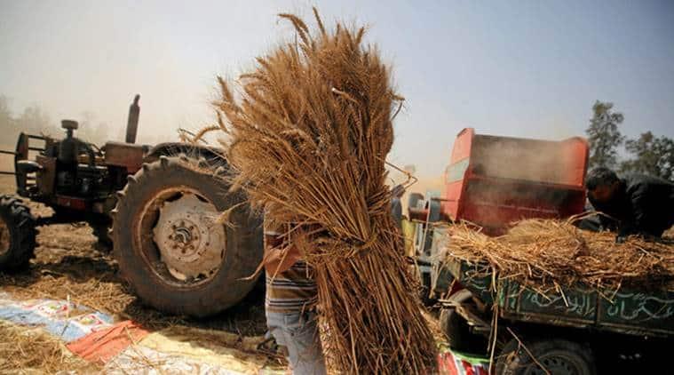 Image result for kanak farm punjab