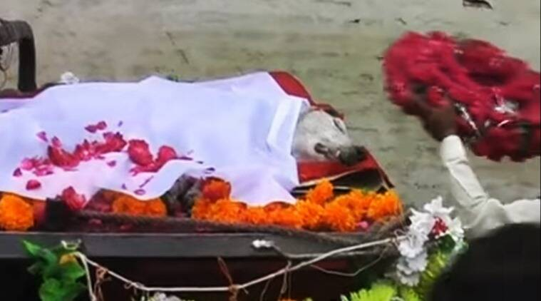 funeral procession for dog in bhopal video, funeral held for dog in bhopal, bhopal funeral for dog, bizarre traditions in india, bizarre indian videos, indian express, indian express news