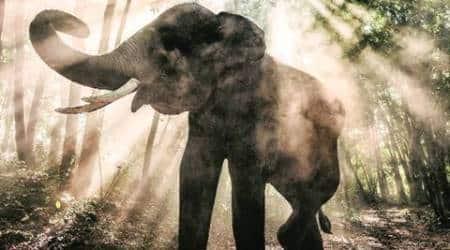 Five elephants killed in five days inAssam