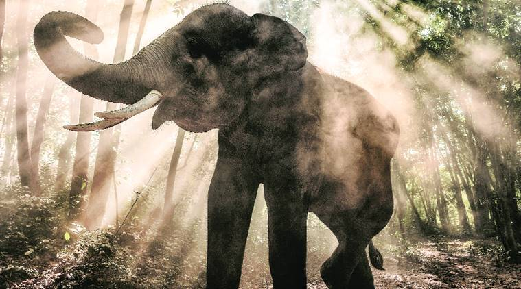 elephants-759