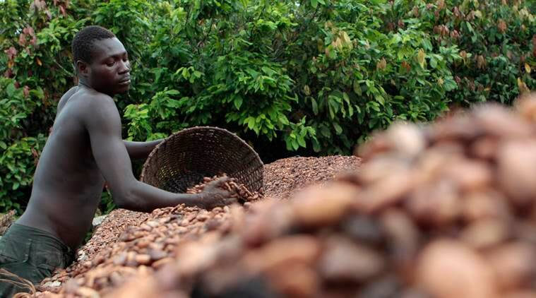 http://images.indianexpress.com/2016/09/ivory-coast-cocoa-to-_759.jpg