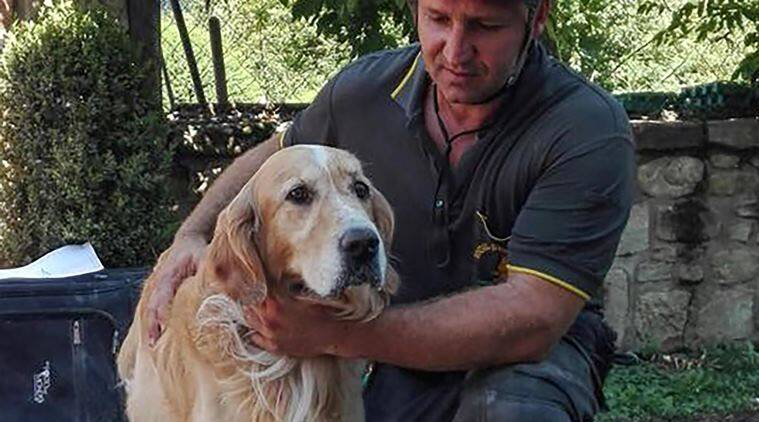 A firefighter pets Romeo, the golden retriever that was rescued from a pile of quake rubble after firefighters heard the dog barking, nine days after the temblor struck in the town of Amatrice, Italy, Friday, Sept. 2, 2016. The Aug. 24 temblor claimed nearly 300 lives, injured hundreds and left thousands of people either without homes or with homes unsafe to immediately inhabit. (Alessandro Di Meo/ANSA via AP Photo)