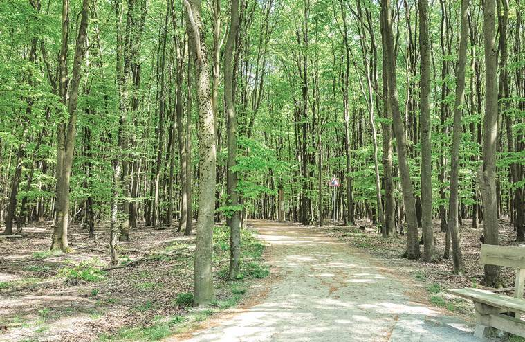A hiking trail through beech trees in the Wild Kermeter