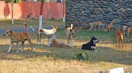 Culling should not mean indiscriminate killing: SC decision on stray dogs not out of place