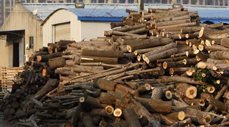 timber export, timber market, timber rates, timber and wood products, Lao People's Democratic Republic, timber export banned, latest news, india news, indianexpress