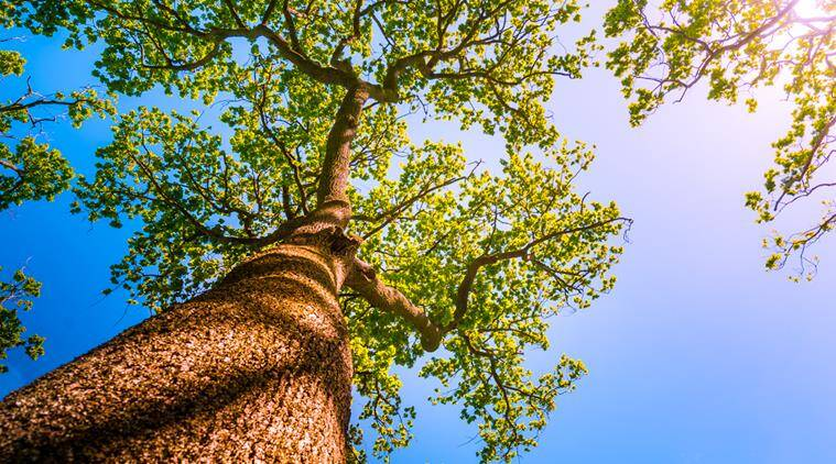 trees to get natural heritage tag in delhi, 16 types of trees to get tag of natural heritage in capital, exotic trees in delhi, names of trees in delhi getting natural heritage tag, indian express, indian express news