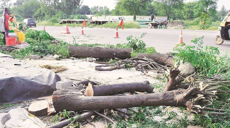 Trees axed, Trees axed flyover, flyover, Balongi Khanpur Chowk stretch, NH-21, national highway, National Highway Authority of India, chandigarh, chandigarh news, India news