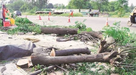 Five booked for axing Khair trees