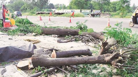 Case against Gurgaon company for cutting over 1,000 trees