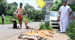 Indiscriminate Killing Of Dogs In Wake Of Increasing Attacks On Residents