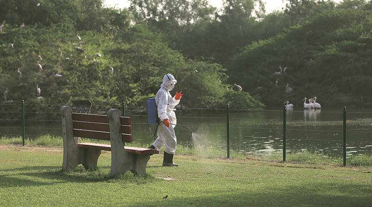 bird flu, bird flu delhi, bird flu death, bird flu alert, bird flu alert delhi, delhi news, india news
