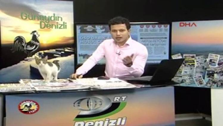 Cat sneaks into the studio during live TV show