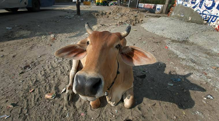 cow, rajasthan minister, Rajasthan Education Minister Vasudev Devnani, cow exhales oxygen, cow inhales oxygen, india news, latest news