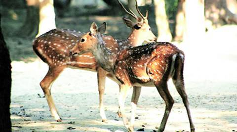 Delhi zoo facing a new challenge – missing mates