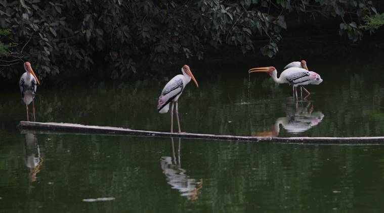 delhi zoo, delhi zoo shuts down, delhi zoo bird flu, bird flu delhi zoo, delhi zoo closed, delhi zoo birds, delhi news, india news, indian express news