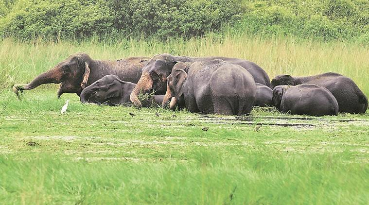 elephant, elephant dead, poaching, indo nepal elephant dead, nepal government, kalabari forest, elephant hunting, dead elephant, indian express news, india news, latest news