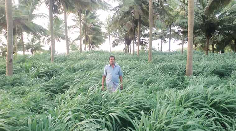 crop prices, india farmers, droughts india, farmer suicide, PPP model, PPP model in milk, agriculture sector, farming news, india news