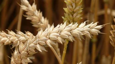 Kharif crop production, Kharif crops in India, India Kharif crops, Latest news, India news, National news, latest news