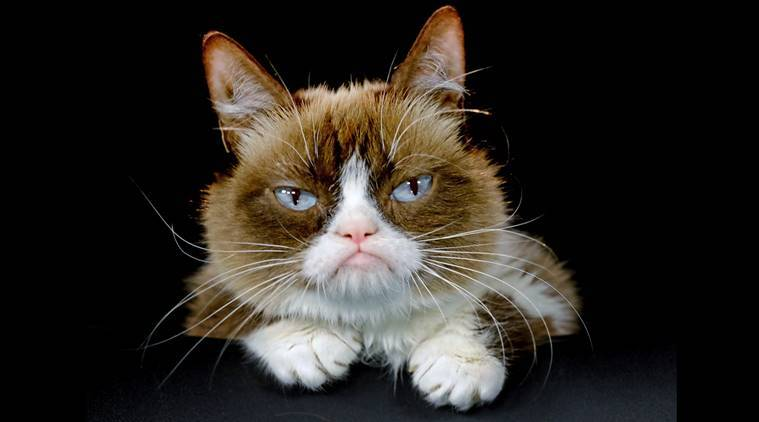 "FILE - This Dec. 1, 2015 file photo shows Grumpy Cat posing for a photo in Los Angeles.  Grumpy Cat is joining the cast of the Broadway musical ""Cats"" on Friday, Sept. 30, 2016. The kitty with the comical frown ""will be worked into the end of the show and will become an honorary Jellicle Cat,"" according to a spokesman for the show.  (AP Photo/Richard Vogel, File)"