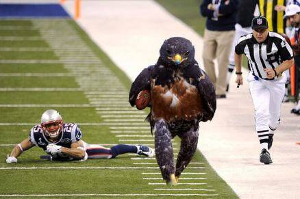 When the Internet found this hawk, a crazy photoshop battle began