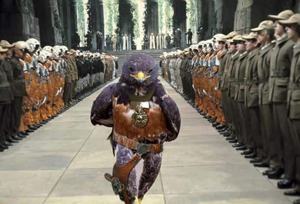 When the Internet found this hawk, a crazy photoshop battle began