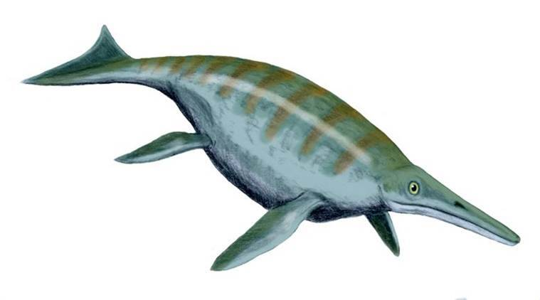 Jurassic reptiles, extinct marine reptiles, British ichthyosaur, ocean reptiles, ichthyosaur, Dinosaurs, World news