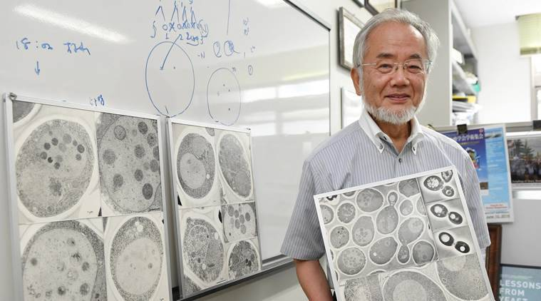 nobel, nobel pricem nobel price medicine, Yoshinori Ohsumi, Yoshinori Ohsumi nobel price, nobel price Yoshinori Ohsumi, Ohsumi nobel price, nobel prize, nobel prize week, nobel prizes this year, nobel prizes 2016, world news latest world news