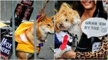 halloween, halloween 2016, halloween parties, halloween for dogs, dogs this halloween, doh halloween parties, animals dressed as humans, donald trump, donald trump themed halloween, us elections themed halloween, indian express, indian express news