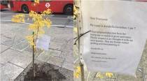 7-yr-old girl wins heart by planting a tree on busy London street, even Westminster is lauding her!