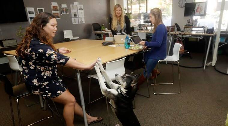 Dog therapy, Dog therapy academics, female students benefit dog pets, Stress and Health, therapy dog session, indian express