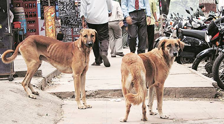 animal activist, stray dog blinded, animal abuse, animal abuse chandigarh, animal abuse india, latest news, latest chandigarh news