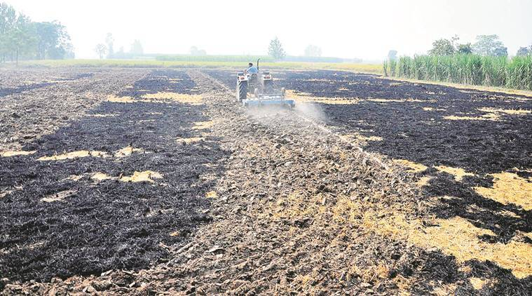 stubble, stubble burn, slash and burn, slash and burn farming, haryana farmers, punjab farmers, haryana stubble, punjab stubble, wheat paddy cycle, pollution, stubble pollution, health problems, indian express news, india news