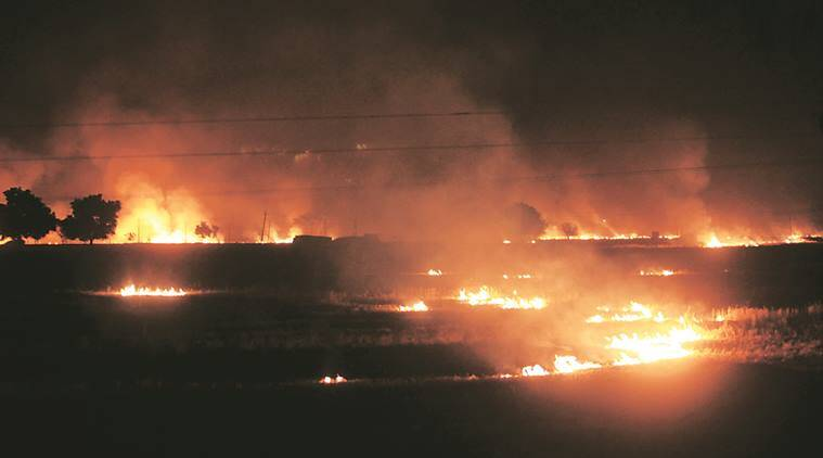 Paddy stubble set on fire near Mukatsar Sahib. (Express Photo by Gurmeet Singh)
