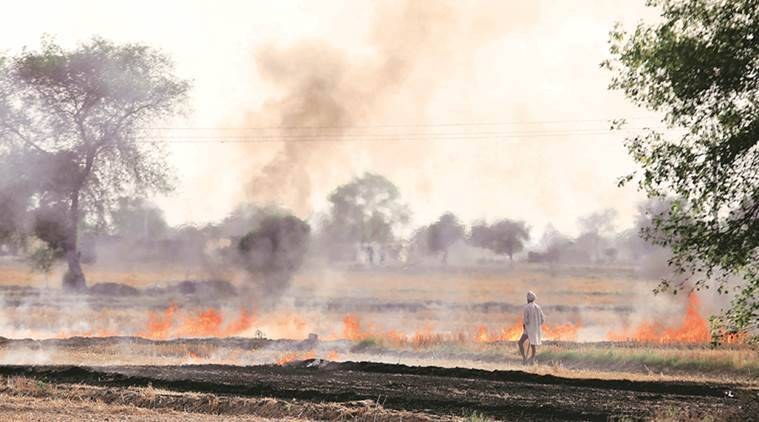 stubble, stubble burn, slash and burn, slash and burn farming, haryana farmers, punjab farmers, haryana stubble, punjab stubble, wheat paddy cycle, pollution, stubble pollution, health problems, paddy burning laws, paddy burning, indian express news, india news, Congress, AAP manifesto, stumble burning, AAP-stumble burning-farmers