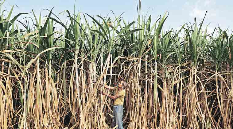 devendra fadnavis, fadnavis, devendra fadnavis drip irrigation for sugarcane, maharashtra sugarcane, maharashtra sugarcan irrigation, drip irrigation sugarcane maharashtra, solar pump maharashtra, maharashtra government, maharashtra news, indian express news, city news, india news