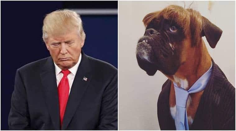 trump-dog-759