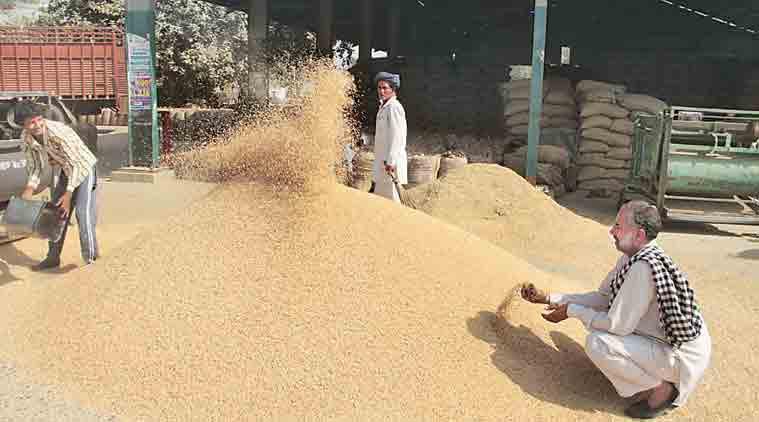 Govt wheat stocks, wheat stocks, wheat stocks production foodgrain output, foodgrain stocks, consumer price index, wheat price, india wheat price, govt wheat output estimates, wheat production, wheat output this season, indian farmers, agriculture ministry, wheat price, wheat in mandis, food corporation of india, india news