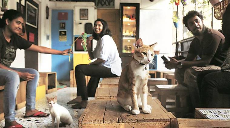 mumbai, cafe cat studio, stray cats mumbai, mumbai stray cats, mumbai cats, feline cafe, cafe for cats mumbai, india news