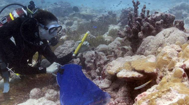 Great Barrier Reef, restoring Great Barrier Reef, Great Barrier Reef bleaching, global warming, tech news, science news, latest news, indian express