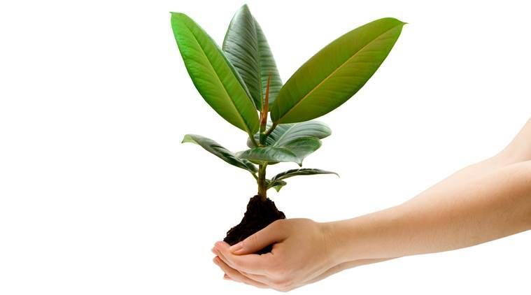 female hand holding a small tree over white