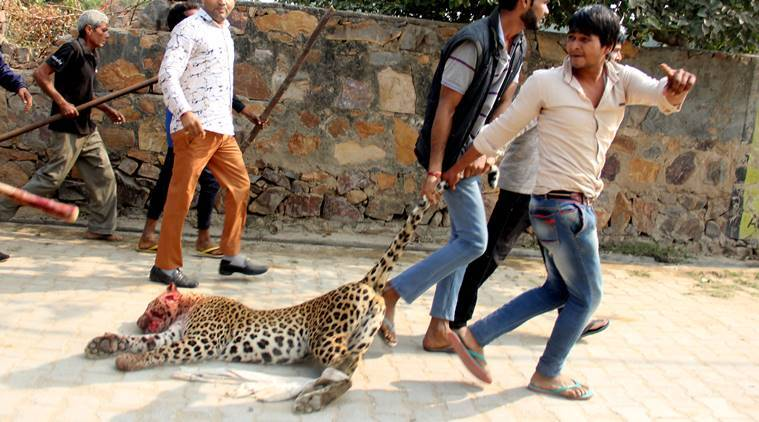 Spotted A Leopard Back Off Stay Calm Let It Slip Away