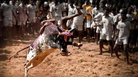 Jallikattu row: DMK to hold statewide protests